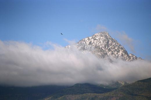 orzeł w Tatrach
